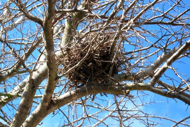 B1-RD Nest