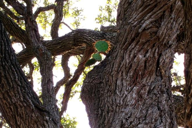 Cactus upa Tree