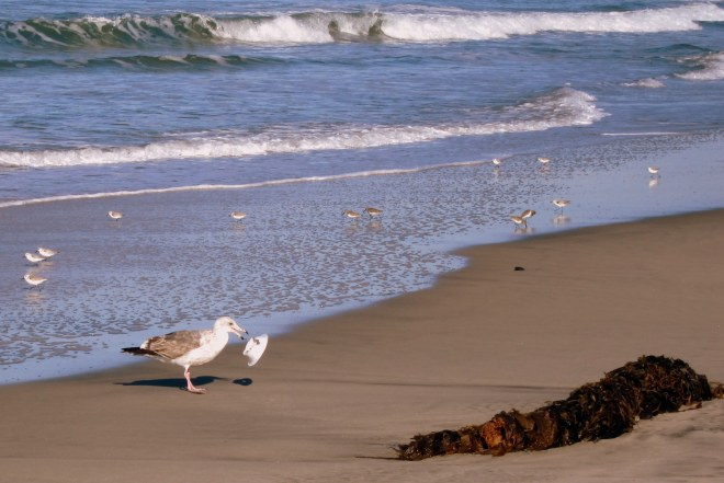 Shore Bird's Pix #1