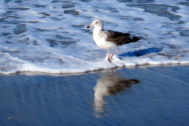Shore Bird's Pix #2