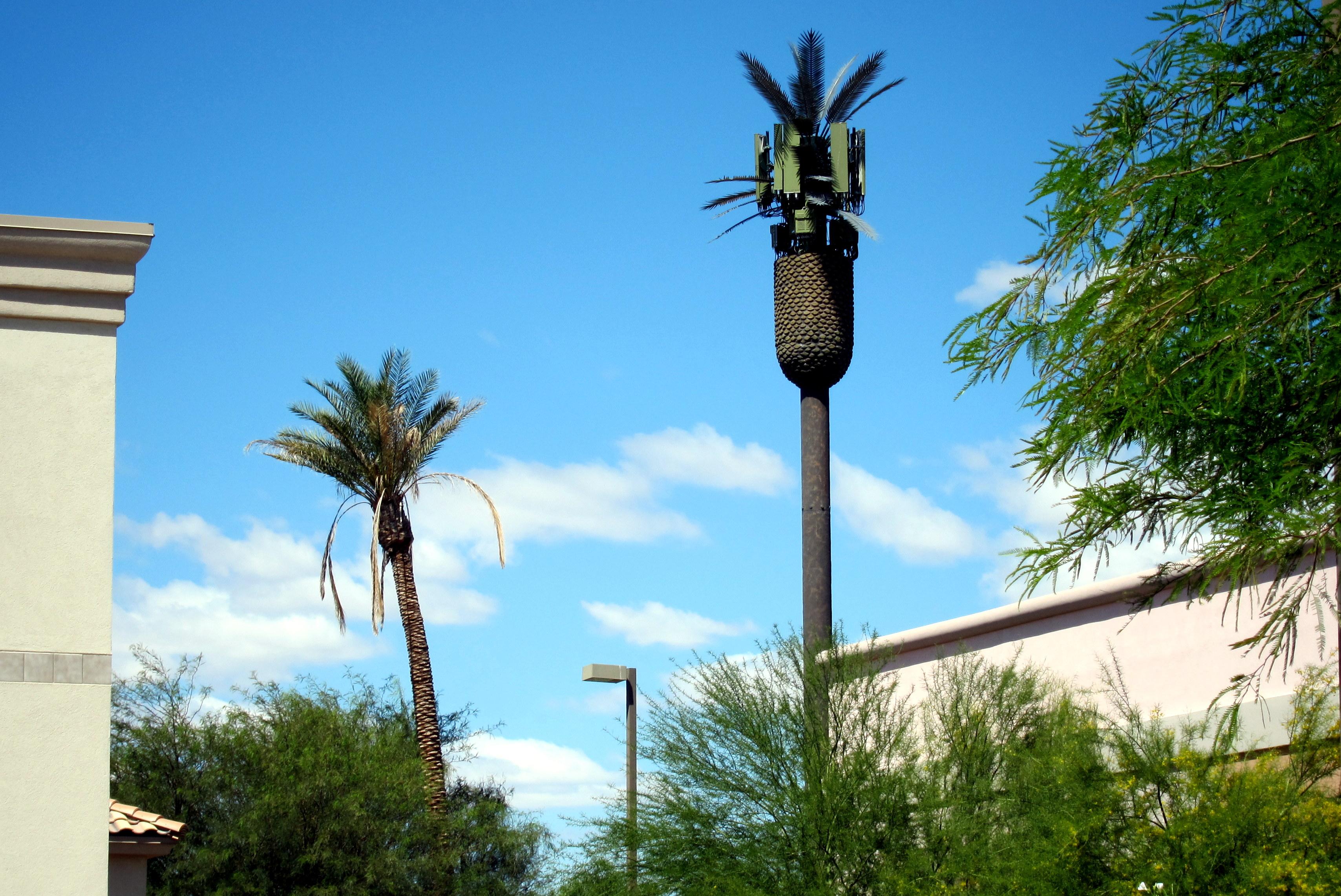 cell-palm-tree.jpg