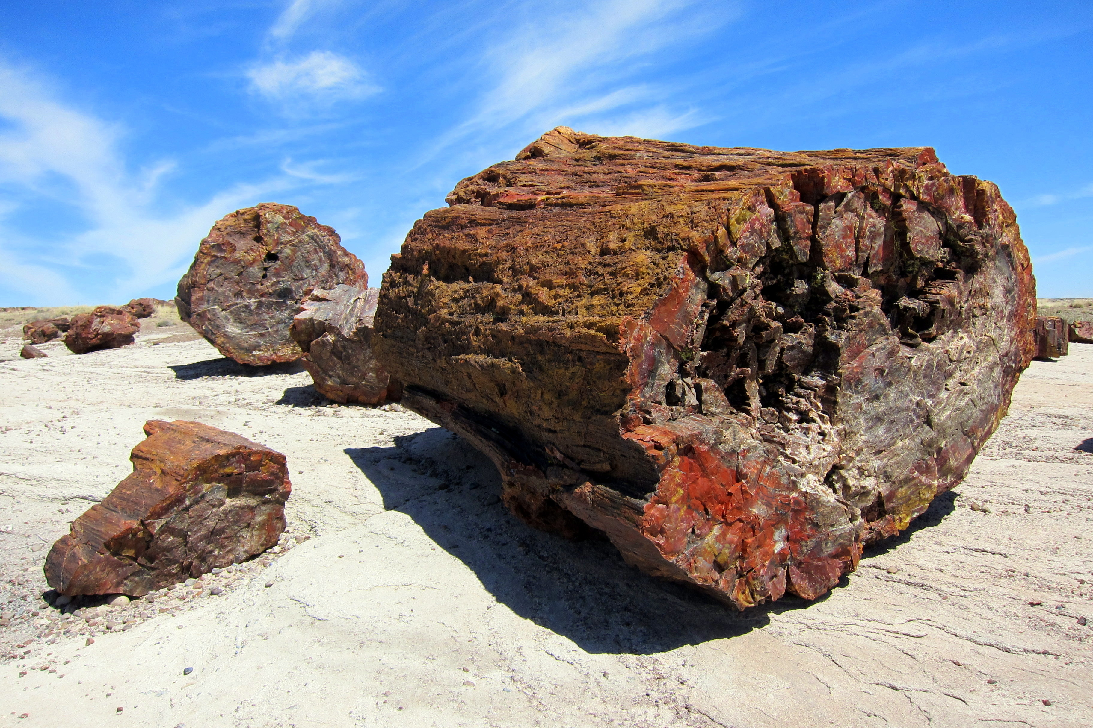 What Caused Petrified Forest