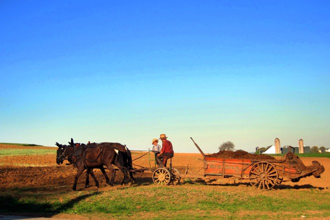Amish Country #3