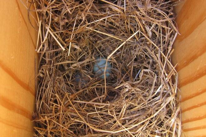 Nesting box-inside