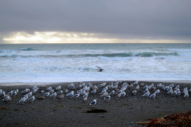 Flight of The Seagull's, Pix #1