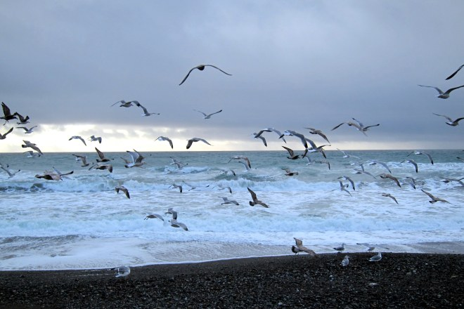 Flight of The Seagull's, Pix #3