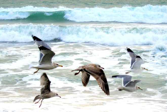 Flight of The Seagull's, Pix #4