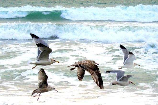 Flight of The Seagull's, Pix #4