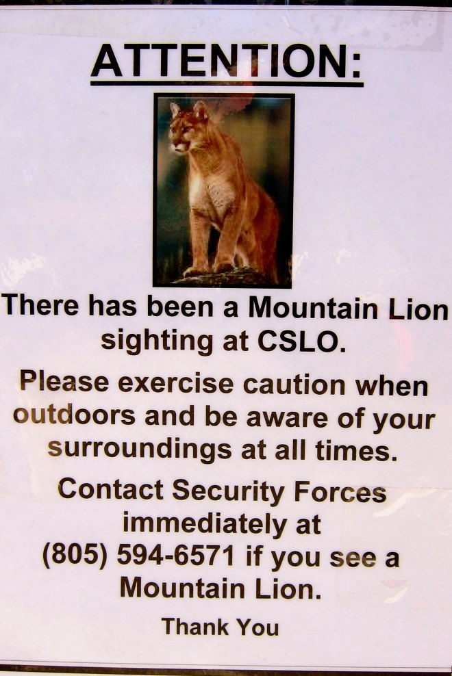 Mountain Lion!