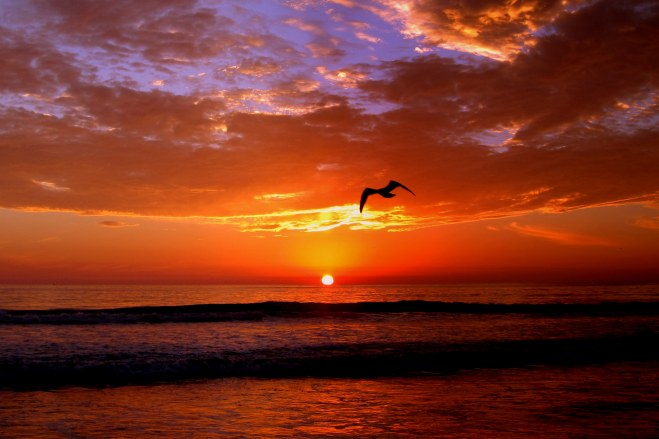Del Mar Beach Sunset, Pix #3