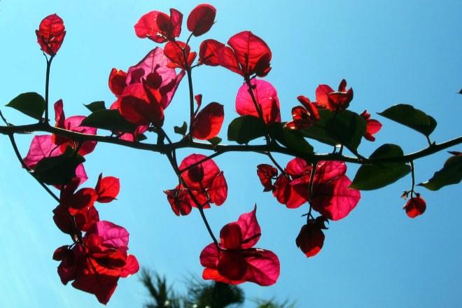 Purdy Flower