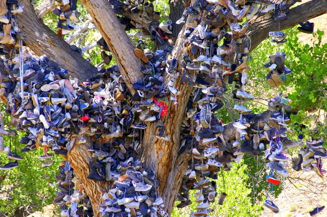 Shoe Tree-Oregon