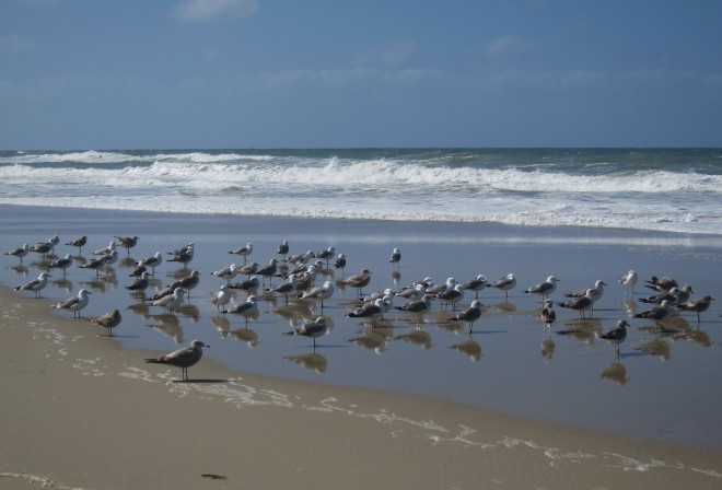 2016-03-29, Del Mar Beach, Photo #49